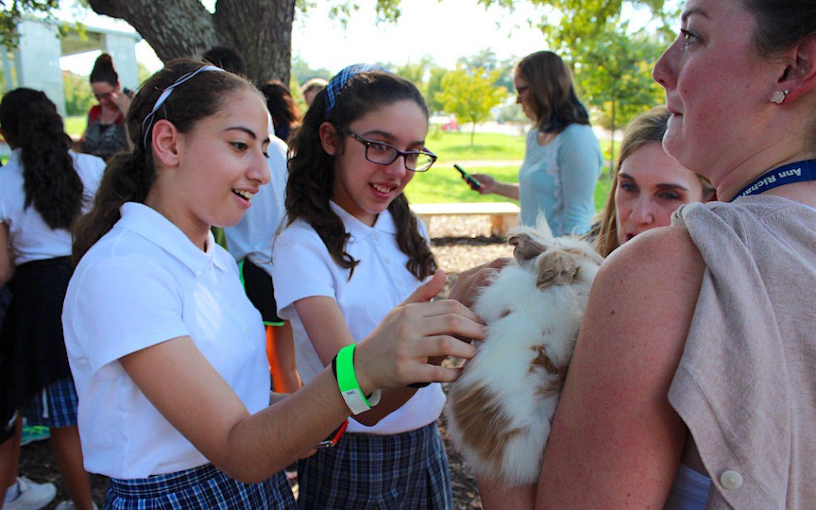 Petting Zoo (2)