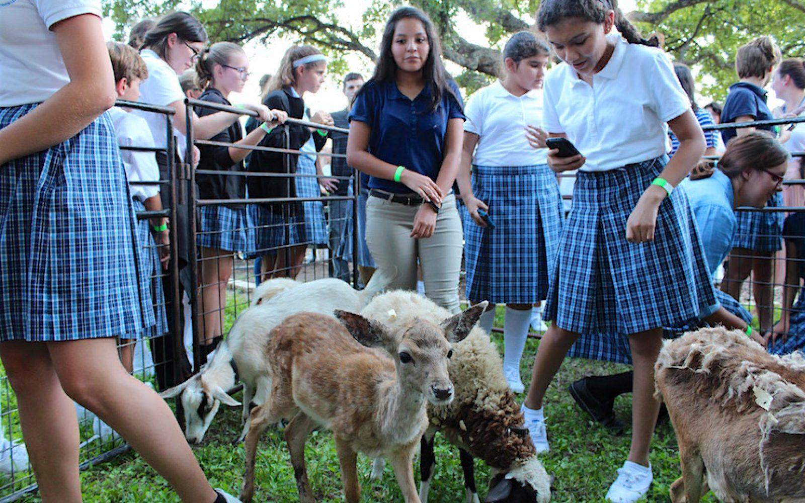 Petting Zoo (3)